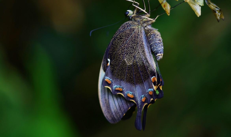 Un papillon