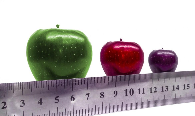 Une règle mesure le calibre des pommes
