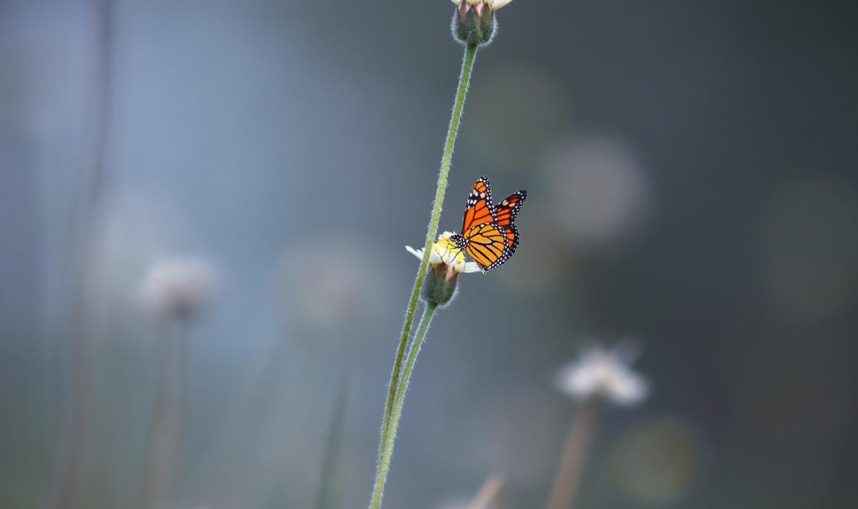 Un papillon sur une fleur