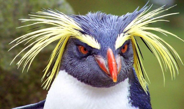 Ce que Google ne vous a pas dit sur Penguin version 4.0...