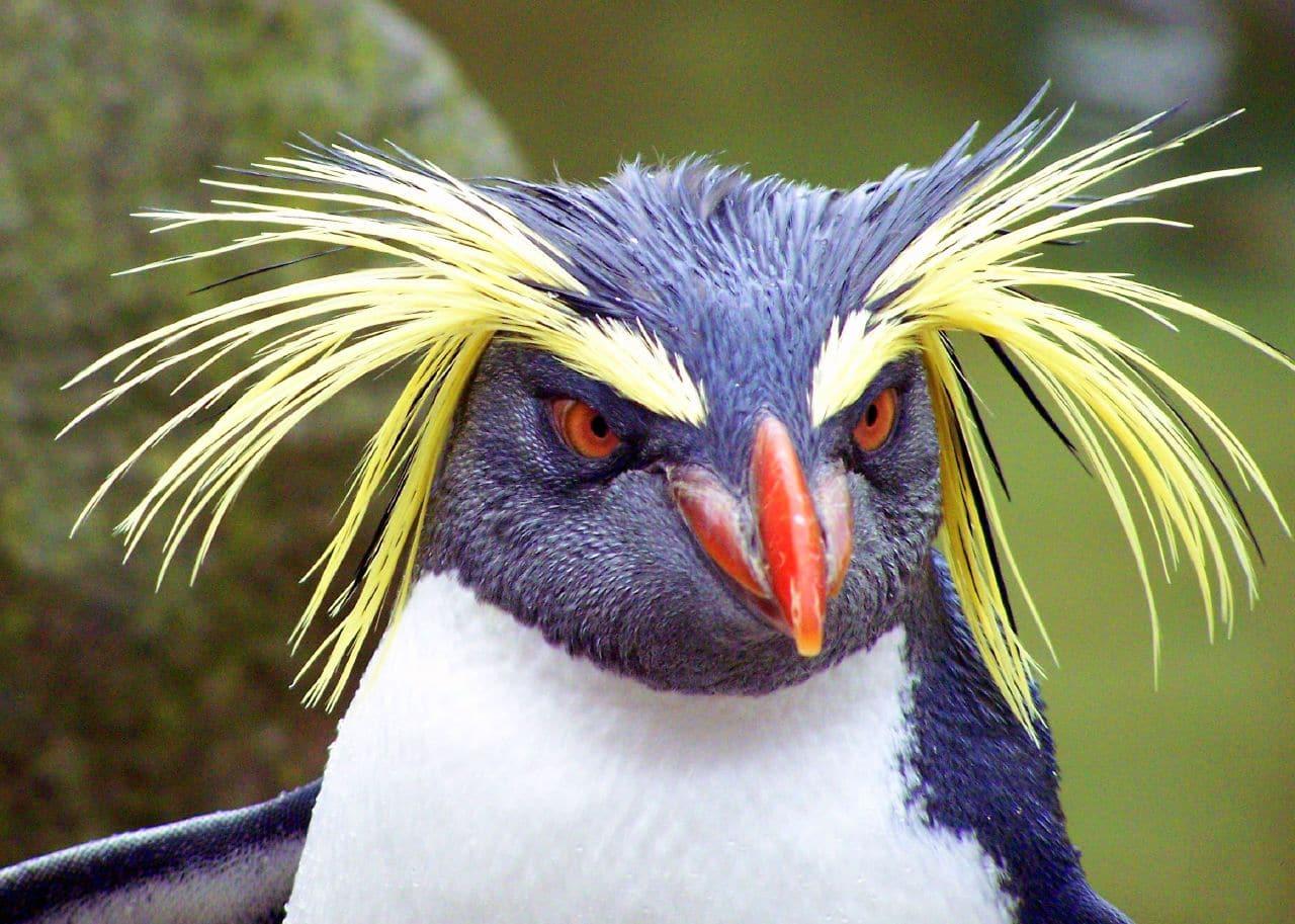 pingouin symbolisant l'algorithme de google