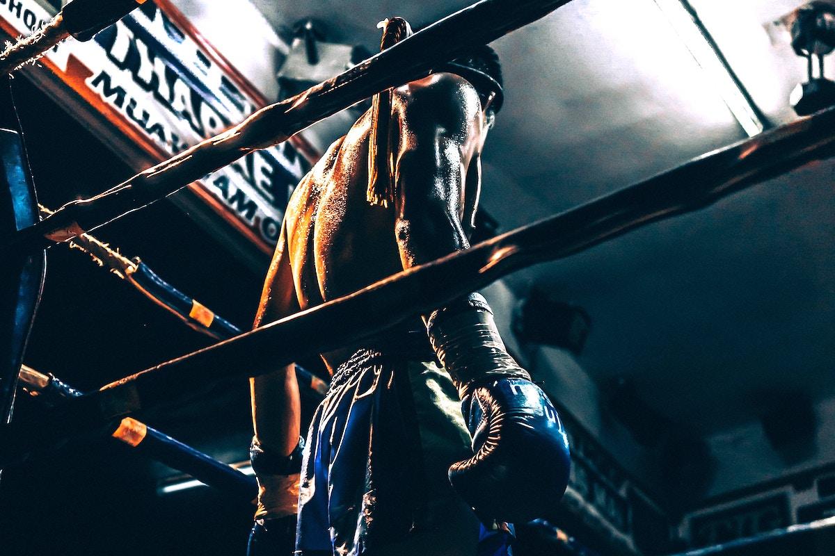 Une très belle photo d'un boxer prêt à engager le combat