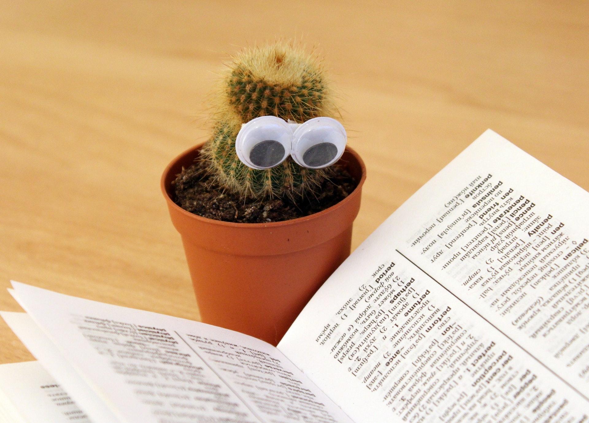 cactus lit un dictionnaire