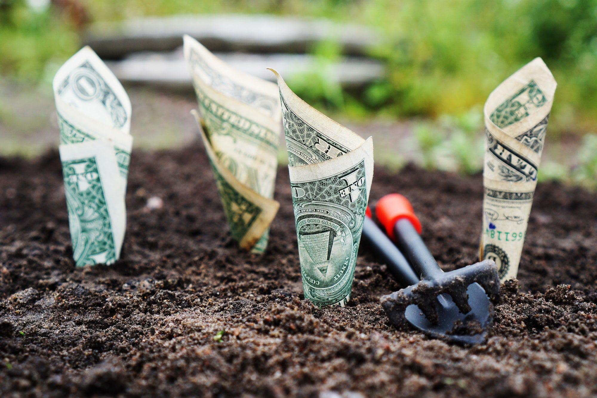 Billets plantés dans la terre